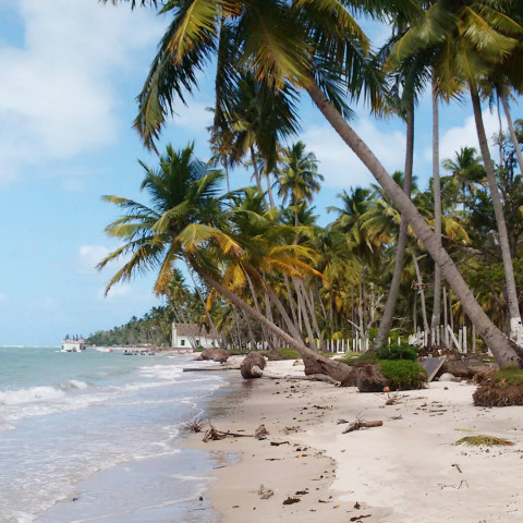 Imagem representativa: Venha aproveitar a Praia dos Carneiros a 52 km ao Sul de Porto de Galinhas | Conhecer Agora